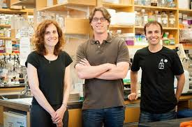 Bacterial metabolites regulate immune system function in the colon and may  help reduce inflammatory bowel disease | News | Harvard T.H. Chan School of  Public Health