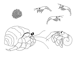 Small Picture Free Life Cycle Coloring Pages StuwahaCreations