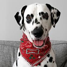 diy no sew ugly sweater dog bandana
