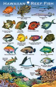Oahu Fish Chart Hawaiian Reef Fish Guide