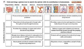 Homeostasis And Body Systems Chart Google Search Le Education