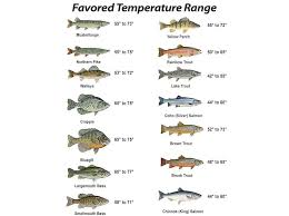 Improve Your Fishing Strategy With Kestrel 2500 Pocket