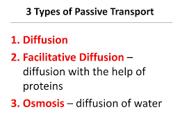 3 Types Of Passive Transport Ppt Cellular Transport Powerpoint Presentation Id 1958584