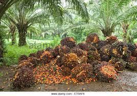 Fruits Grow In Kerala  Is Strawberry A FruitKerala Fruit Trees