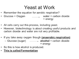8 yeast at work remember the equation for aerobic respiration