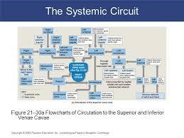 Venous Blood Flow Chart 21 Blood Vessels And Circulation C H A P T E R Ppt Video