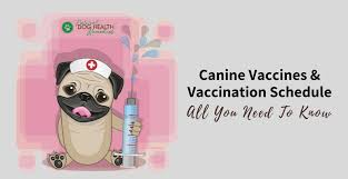 Pug Dog Vaccination Chart Canine Vaccines And Vaccination Schedule A Dog Owners Guide