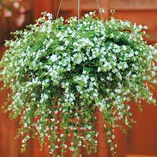 decorative hanging baskets for plants hanging wall planters