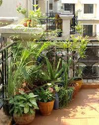 Design Decor & Disha: Gardening