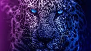 Blue Eyes Lion Lion wallpapers 4k, Lion ...