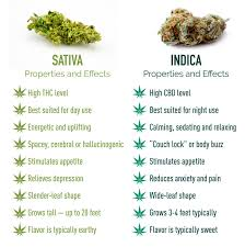 Sativa And Indica Chart Can Cbd Oil Be Indica Or Sativa