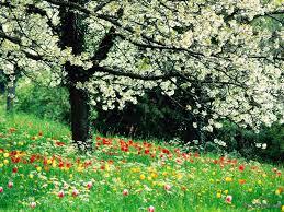 Сочинение на тему Весенние цветы  Из времен года больше всего я люблю весну за то что она дарит нам самые красивые и нежные цветы Весенние цветы особенные их не сравнить с осенними