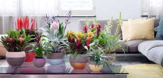Tuinplant Woonplant September Praxis Blog