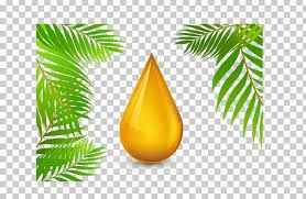 roundtable on sustainable palm oil olive oil png clipart argan oil branch carrier oil ornament