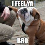 Sympathetic Bulldog Meme Generator - Imgflip via Relatably.com