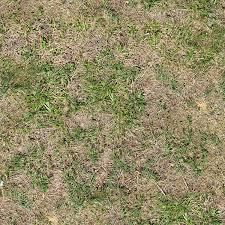 tall grass texture seamless. Grass Textures For Designers3 ? Tall Texture Seamless