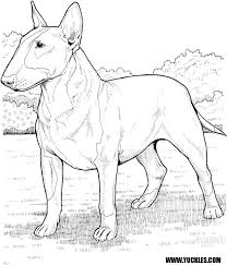 Small Picture Bull Terrier Coloring Page by YUCKLES