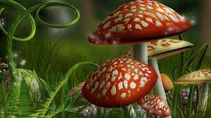 3D Mushroom Live Wallpaper For Pc ...