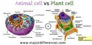 Plant Cells Vs Animal Cells Venn Diagram Cell Vs Plant Cell Vs Animal Cell Venn Diagram Bacteria House
