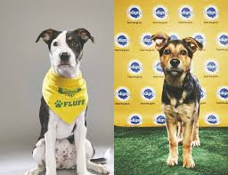 Budweiser Clydesdales and Puppy Bowl Stars Visit Saturday, 1 p.m. - 3 p.m..  Sunday, 2 p.m. - 5 p.m.