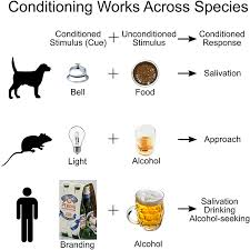 Classical Conditioning In The Classroom From Pavlovs Dog To Rats Using Drugs Frontiers For Young