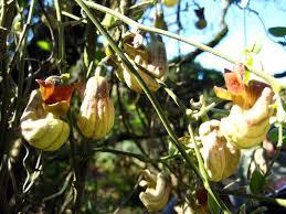 Full Shade PlantsWall Climbing Plants Southern California