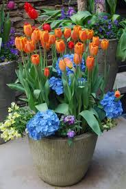 Small Picture 13 best Spring Annuals and ideas images on Pinterest Spring