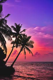 Tropical Wallpapers: Free HD Download ...