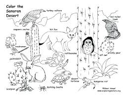 desert animals coloring pages desertcoloring pages a teacher desert animals coloring pages free desert