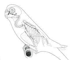 Diagram golden eagle skeleton diagram printable medium size large