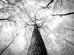 Black-And-White Tree Wallpaper ...