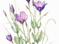 Нарисовать цветы: лучшие изображения (28) | Нарисовать ...