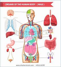Human Anatomy Chart Elegant Body System Chart Hnchawaii