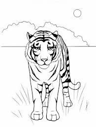 Tigre Della Savana Da Stampare E Da Colorare Gratis Disegni Da
