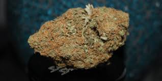 Grand Daddy Purple Marijuana Strain Review and Pictures | NEWSTHC