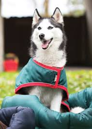 rambo waterproof dog rug green red