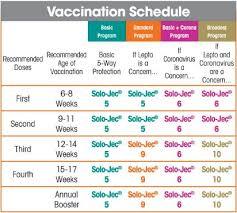 Vaccination Chart Boehringer Ingelheim Vetmedica