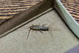 Best Silverfish Traps Insect Cop
