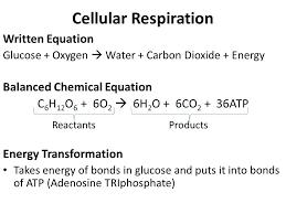 2 cellular respiration written equation