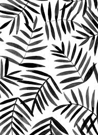 Black And White Patterns Magnificent Black Palm Patterns And Pretty Things Pinterest Black White