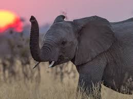 Image result for elephants