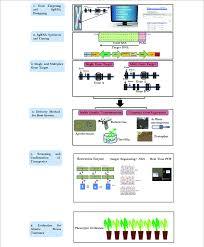 Flow Chart Describing The Steps Involved In Crispr Cas9