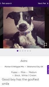 Pet Search Next Pet Astro Pointer Whippet Mix Oklahoma