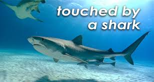 games shark research institute touched by a shark