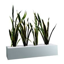office planter. Wallpaper Office Planter M