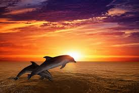 beautiful ocean sunset with dolphin
