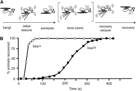 Drosophila As A Model For Intractable Epilepsy Gilgamesh