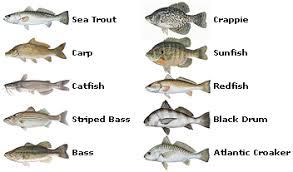 Texas Fish Chart Saltwater Fishing In Texas