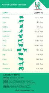 Animal Gestation Periods Veterinary Medicine Pet Vet Vet