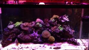 aquaticlife expert series 46 inch 234 watt cree led light fixture 3 watt x 72